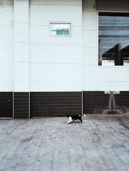 Obdachloser cat walking city concept