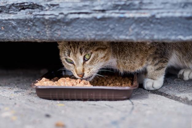 Obdachloser, der an der straße von einer plastikschüssel cateating ist