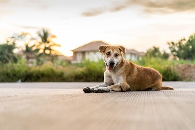 Obdachloser hund, der auf der straße bei sonnenuntergang liegt