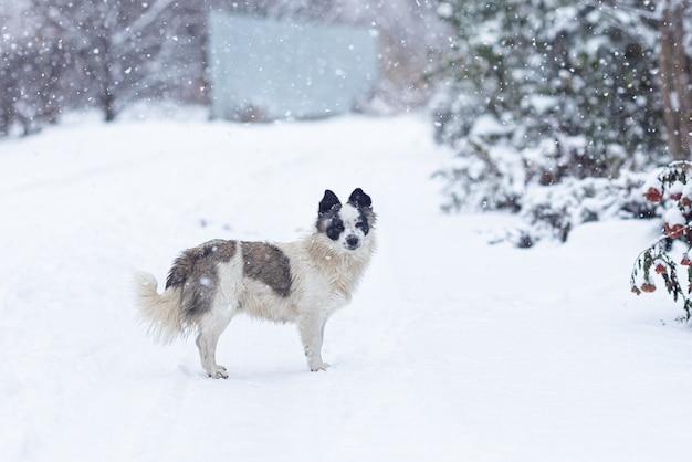 Obdachloser hund, der während eines schneefalls auf der straße geht
