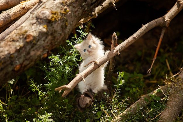 Obdachloses weißes flauschiges kätzchen