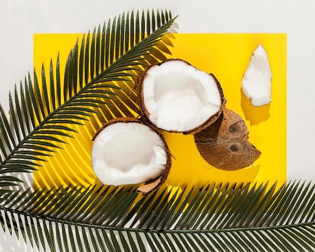 Oben ansicht kokosnussfrüchte