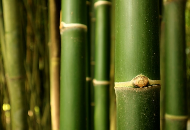 Oben geschlossener grüner bambusbaumstamm des bambuswaldes in thailand