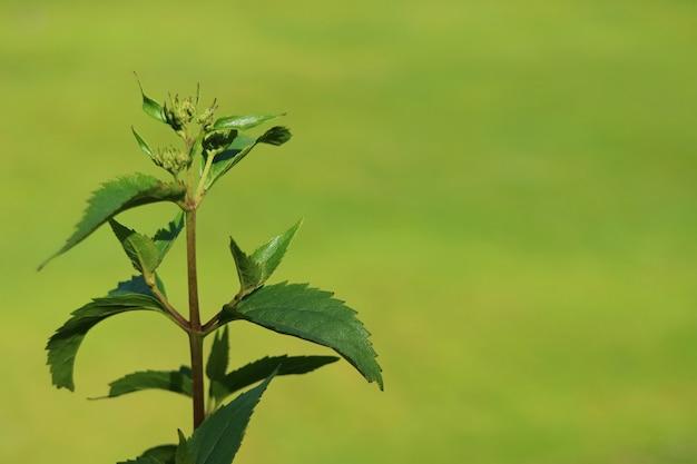 Oben geschlossener junger baum verlässt im sonnenlicht mit unscharfer vibrierender grüner rasenfläche im hintergrund