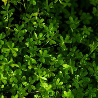 Obenliegende ansicht der grünen blattanlagen
