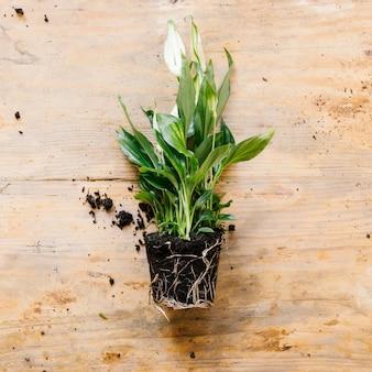 Obenliegende ansicht der grünpflanze auf hölzernem schreibtisch