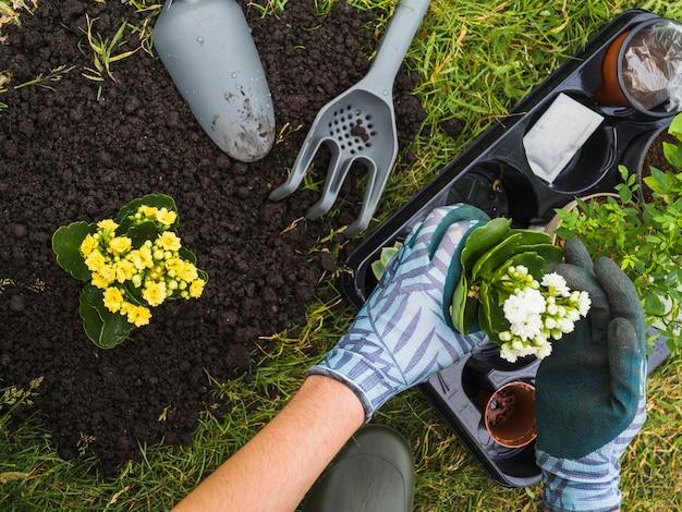 Obenliegende ansicht der hand kleine frische topfpflanze halten