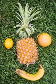 Obenliegende ansicht von frischen früchten auf grünem gras