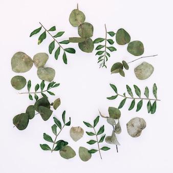 Obenliegende ansicht von grünen blättern vereinbarte auf weißem hintergrund