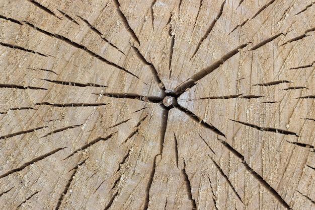 Oberfläche des gefällten baumes