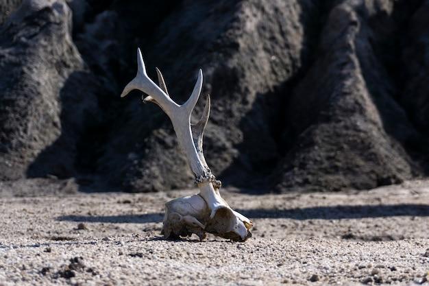 Oberfläche einer wasserlosen wüste mit einem tierschädel im vordergrund