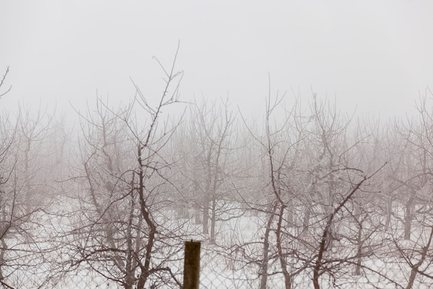 Obstbäume sind in der wintersaison apfelbäume