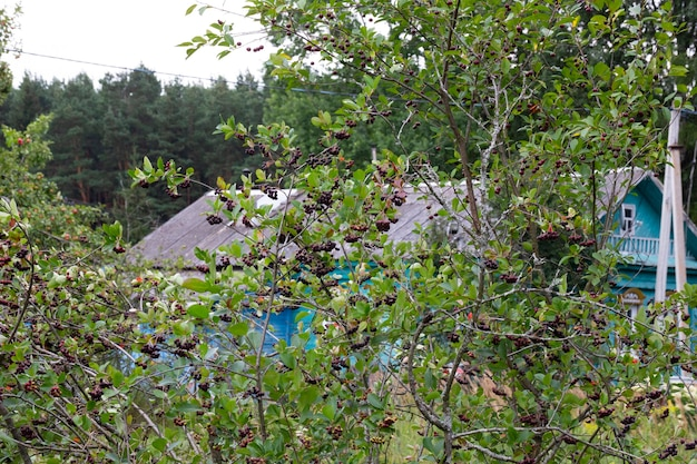 Obstgarten im hintergrund mit dorfhaus und wald