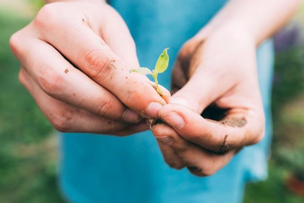 Obstgartenkonzept mit den händen