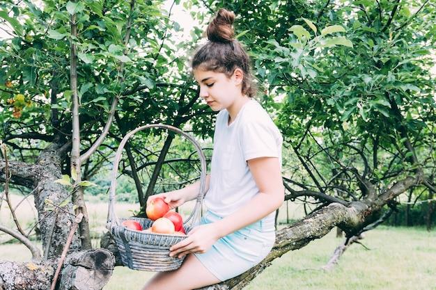 Obstgartenkonzept mit frauensammlungsäpfeln