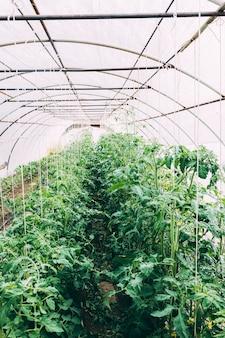 Obstgartenkonzept mit gewächshaus