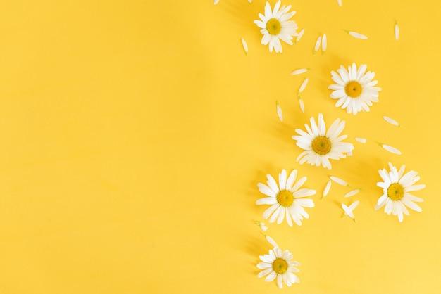 Ochsenauge-gänseblümchen mit einem kopienraum auf einem gelben hintergrund