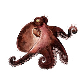 Octopus, aquarell isolierte illustration eines meerestiers.