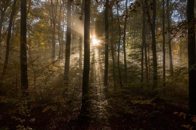 Odenwald an einem nebligen morgen