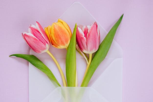 Öffnen sie den transparenten mattumschlag mit mehrfarbigen tulpen auf violettem hintergrund