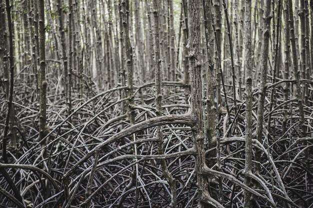 Ökologie des mangrovenwaldes.