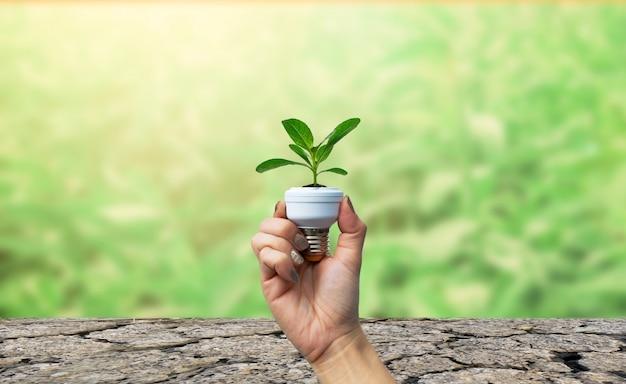 Ökologie und umwelt, baum in der glühbirne