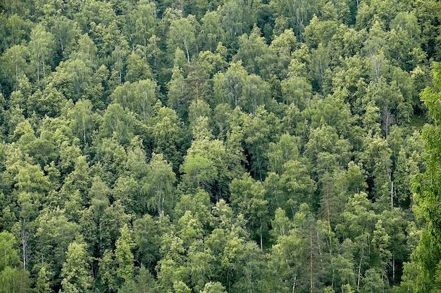 Ökologischer hintergrund mit schöner ansicht von oben auf grünem sommer- oder frühlingstaiga-wald, viele bäume im taiga-wald.