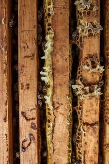 Offener bienenstock mit bienen kriechen entlang den bienenstock auf bienenwabenholzrahmen. imkerei.