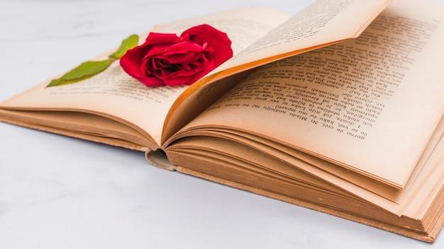 Offenes buch und zerquetschte rose