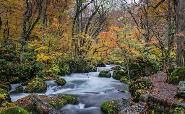 Oirase stream in der präfektur aomori in japan im herbst