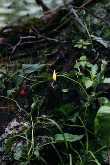 Okkulte esoterische wahrsagerei und wicca-konzept halloween-vintage-hintergrund
