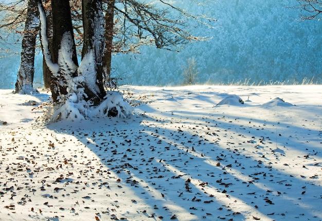Oktober bergbuchenwald mit erstem winterschnee und letztem herbstlaub über