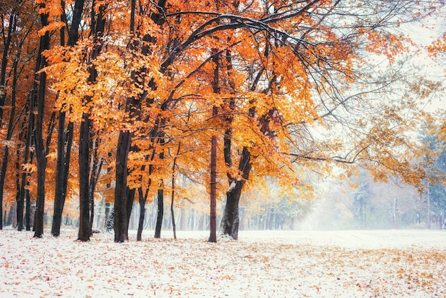 Oktober buchenwald mit erstem winterschnee.