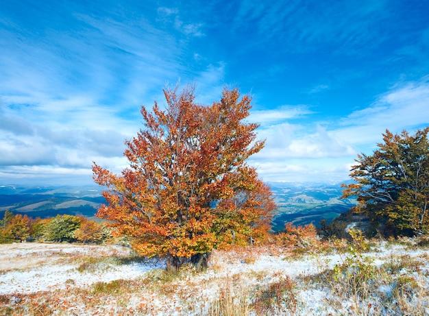Oktober karpaten-bergplateau mit erstem winterschnee und buntem herbstbaum