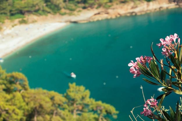 Oleander blume türkis meer verschwommen yacht im hintergrund kabak valley strand in der nähe von fethiye