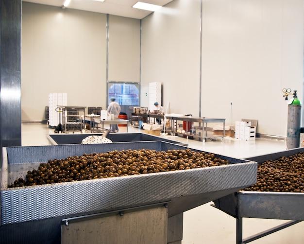 Oliven in einer verarbeitungsmaschine
