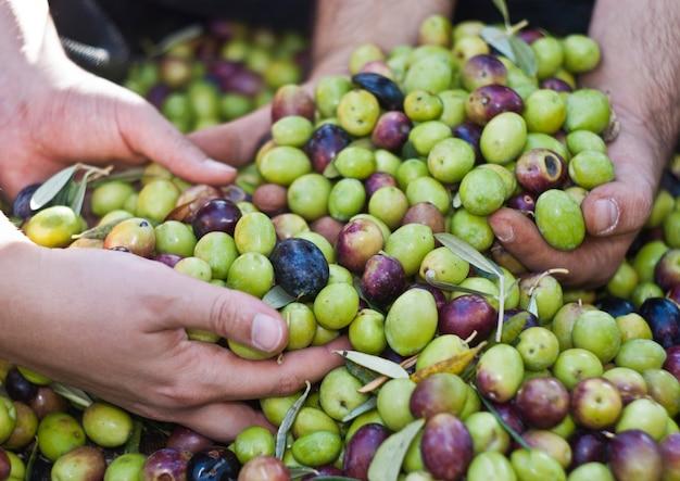 Oliven in vier händen