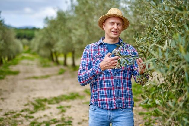 Olivenbauer, der im olivenhain arbeitet.