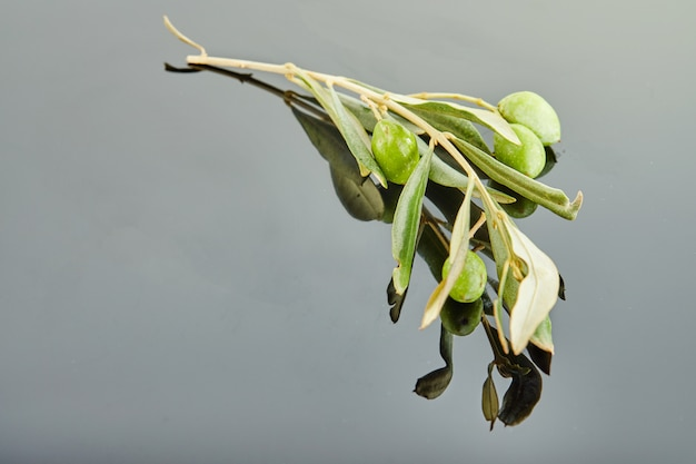 Olivenbaumast mit den früchten, die auf einem grauen hintergrund liegen