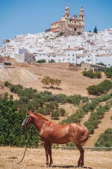 Olvera in andalusien
