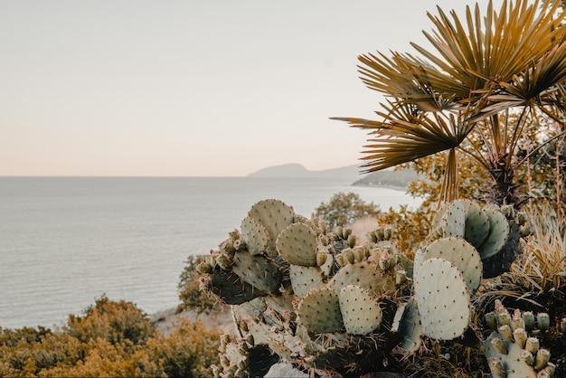 Opuntia-kaktus auf des meeres