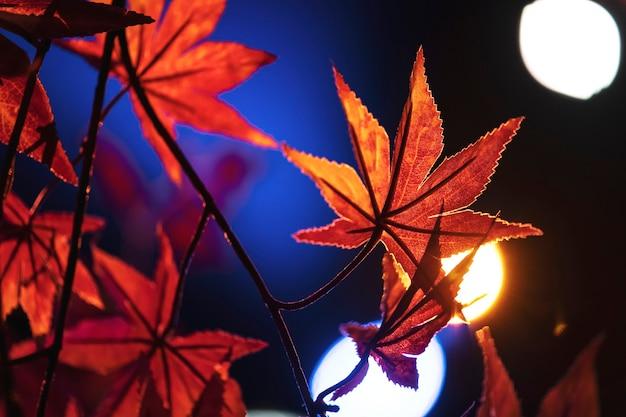 Orange ahornblätter nahaufnahme