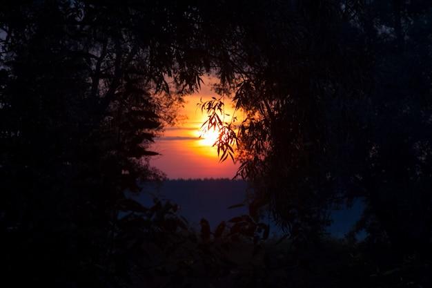 Orange aufgehende sonne durch die zweige der bäume