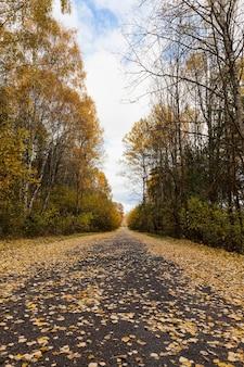 Orange blätter von bäumen in der herbstsaison, natur im park, die besonderheiten der herbstsaison auf einer asphaltstraße