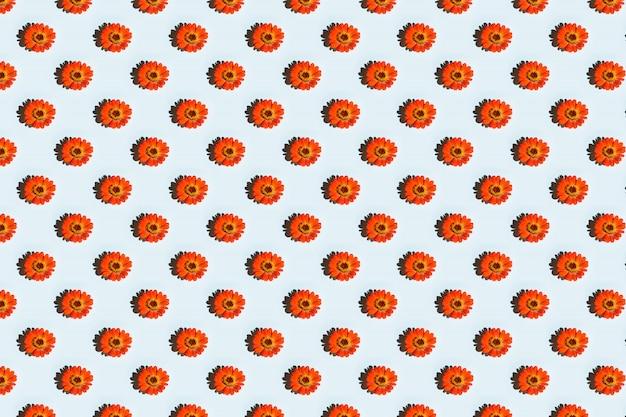Orange blume auf blauem hintergrund
