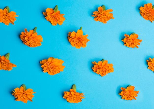 Orange blumen auf blau