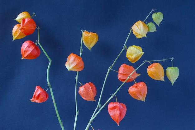 Orange blumen (zweig der physalis) auf einem blauen tisch