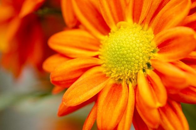 Orange blumenmuster-hintergrundunschärfe