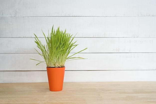 Orange blumentopf mit grüns steht auf dem tisch auf einem weißen hölzernen wandhintergrund. kopieren sie platz