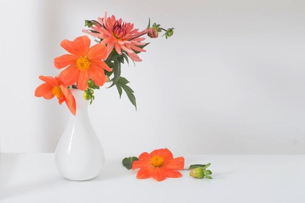Orange dahlie in der weißen vase auf weißem hintergrund